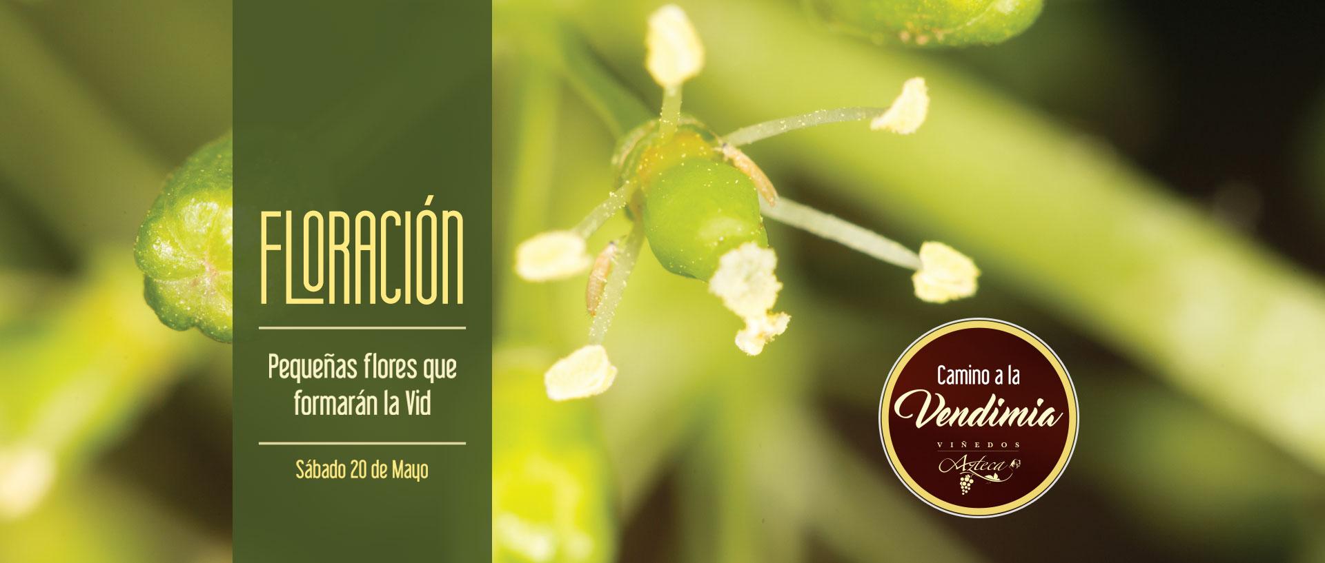slide-floracion1