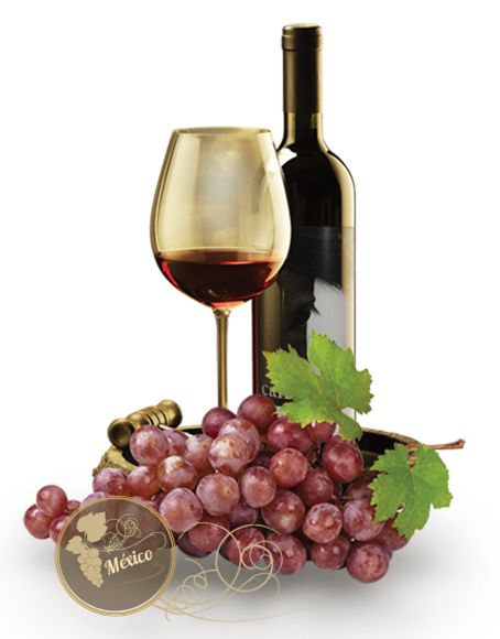 vino botella uvas viñedos